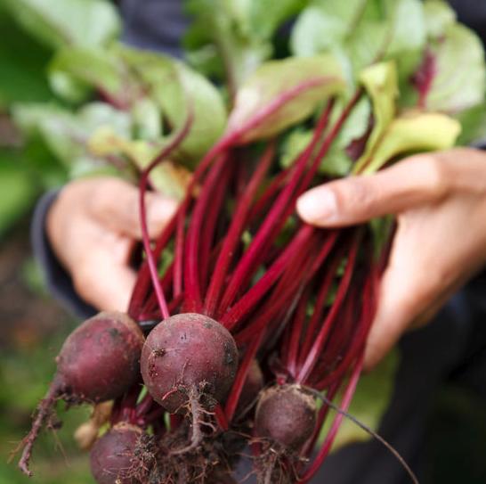 Gardening tips for veggies